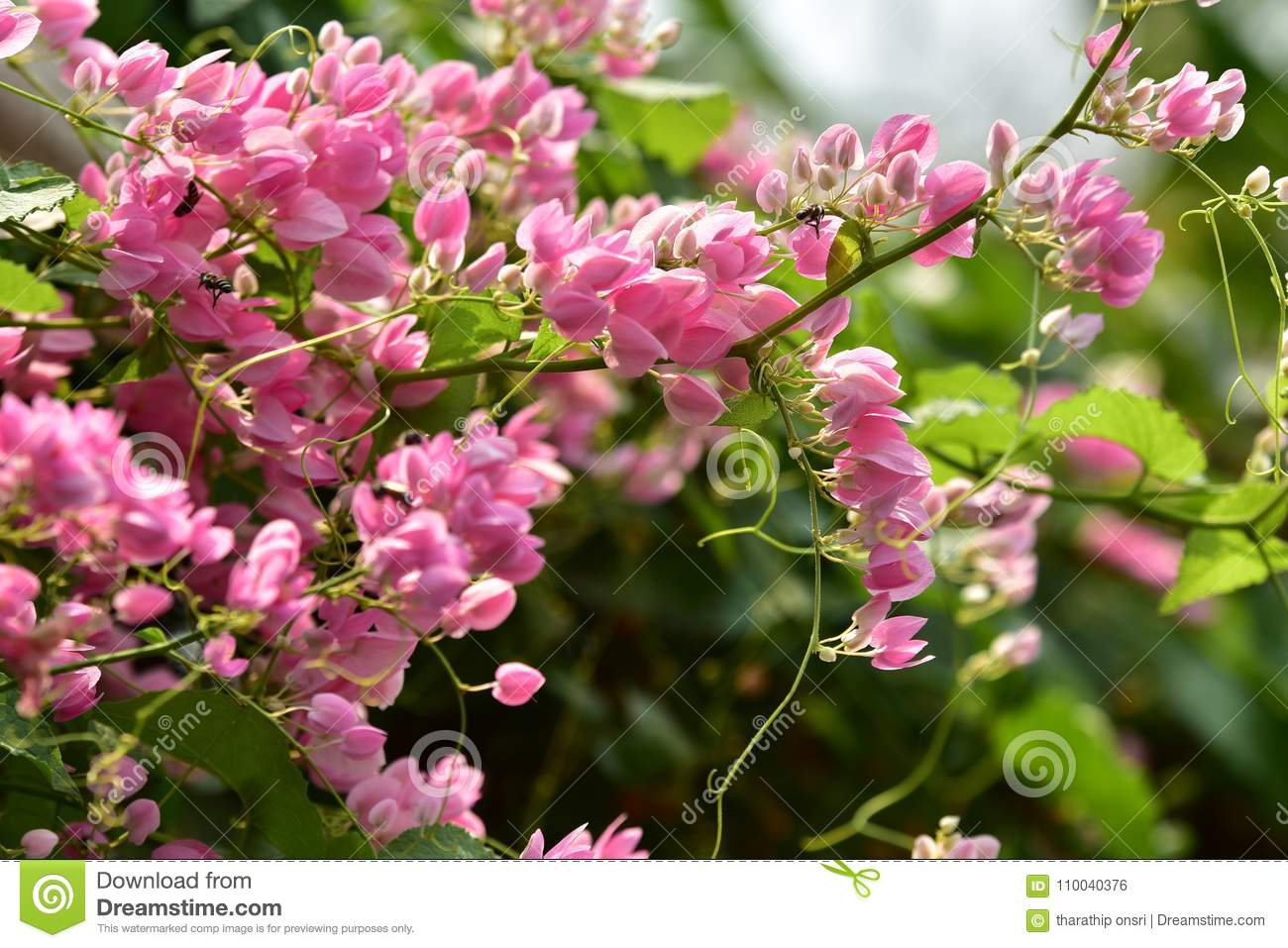 L pink flower blossom on its tree in springtime stock photo image close up of small pink flower blossom on its tree in springtime pink flower petal pink flowersazalea flowers white flowers natural flowers azalea mightylinksfo