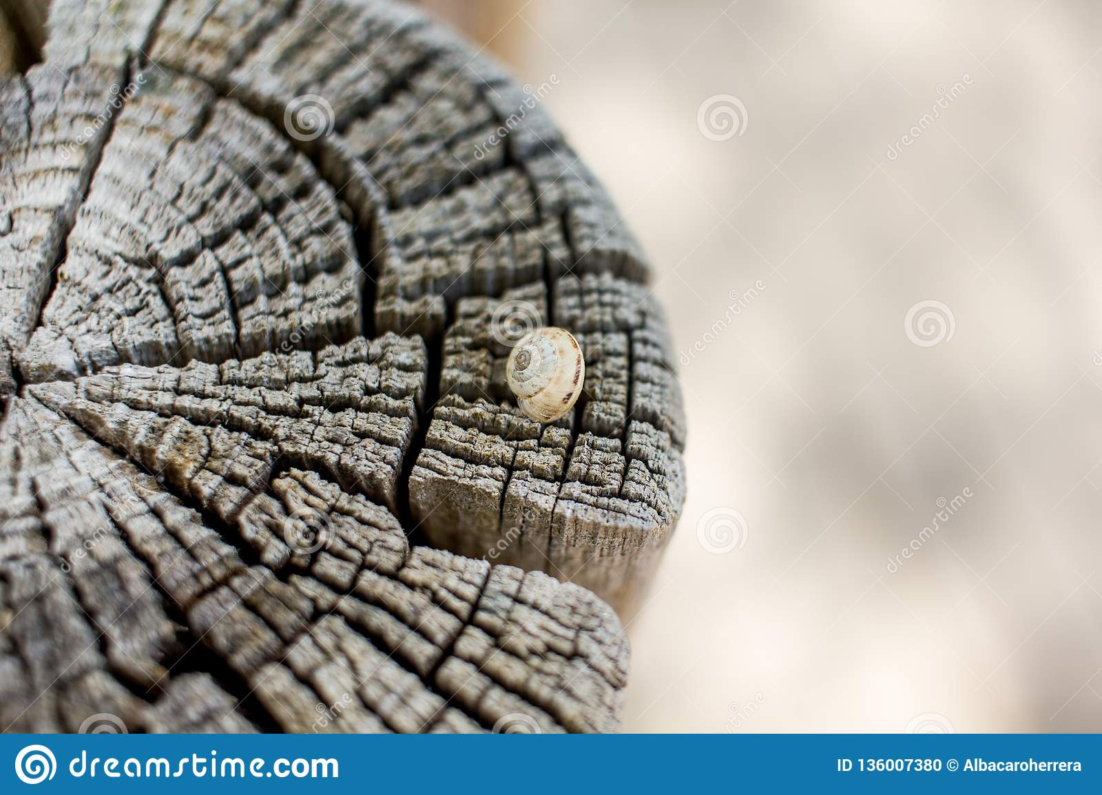 Close up of a snail on a cut trunk