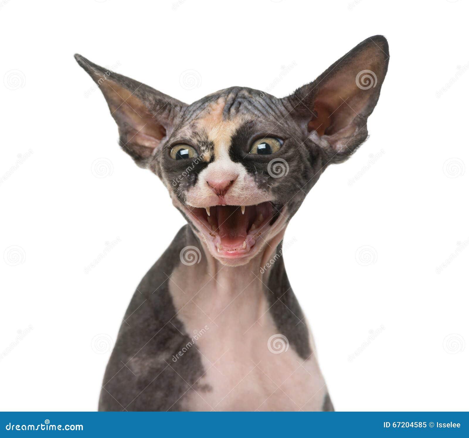 royal canin urinary so cat food