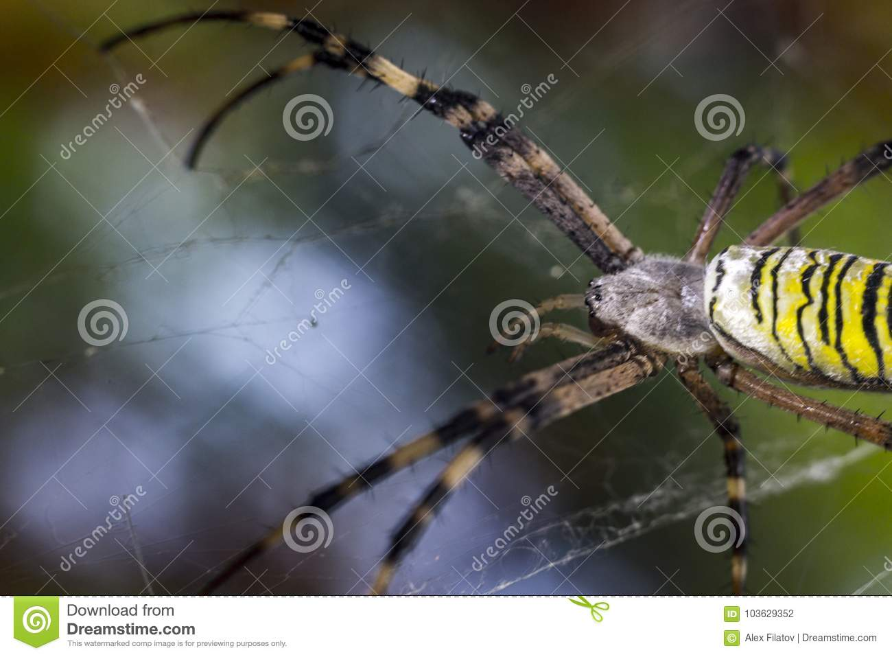 Web Maker stock photo  Image of insects, legs, pattern