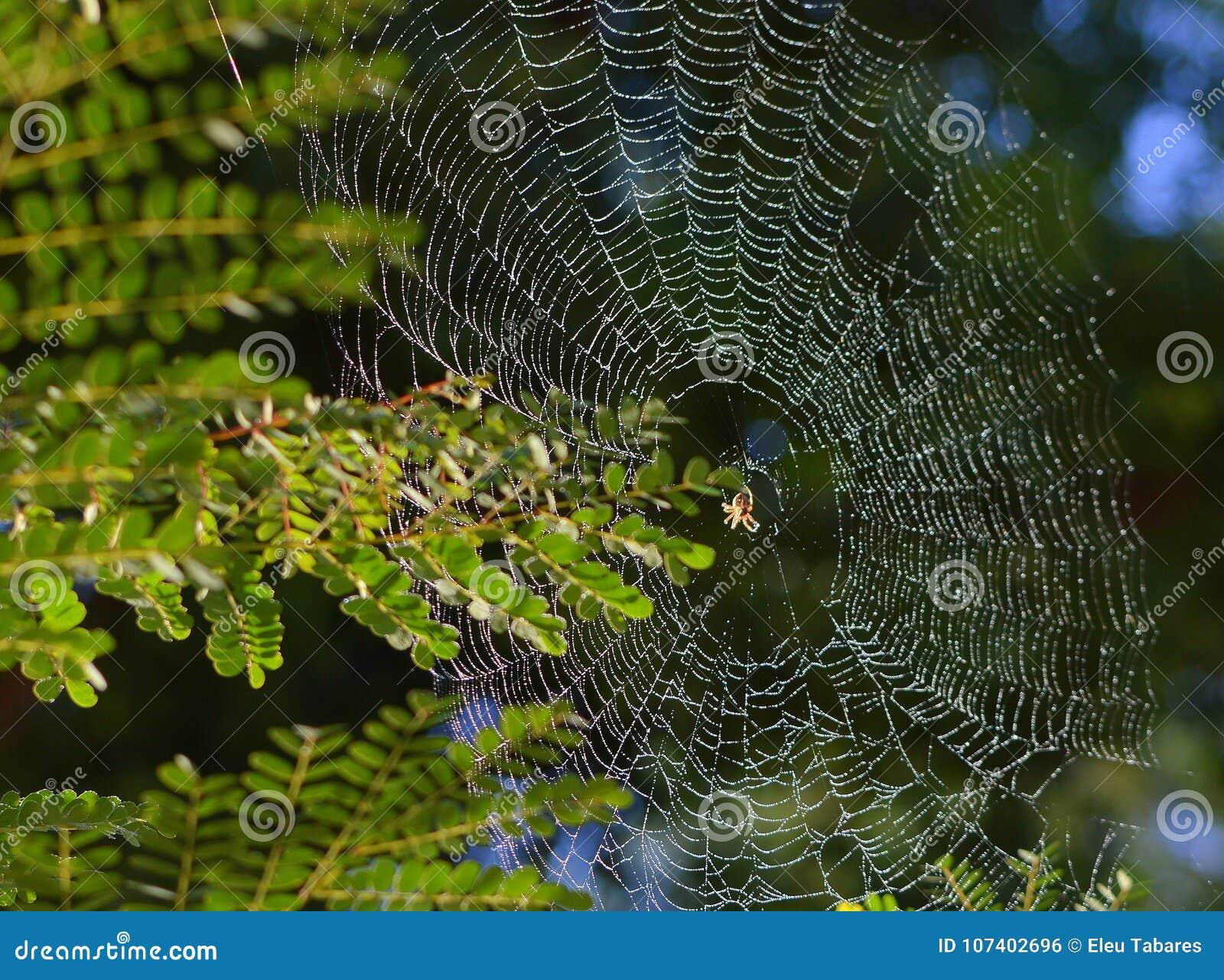 close up a spirder web stock photo image of mantis 107402696