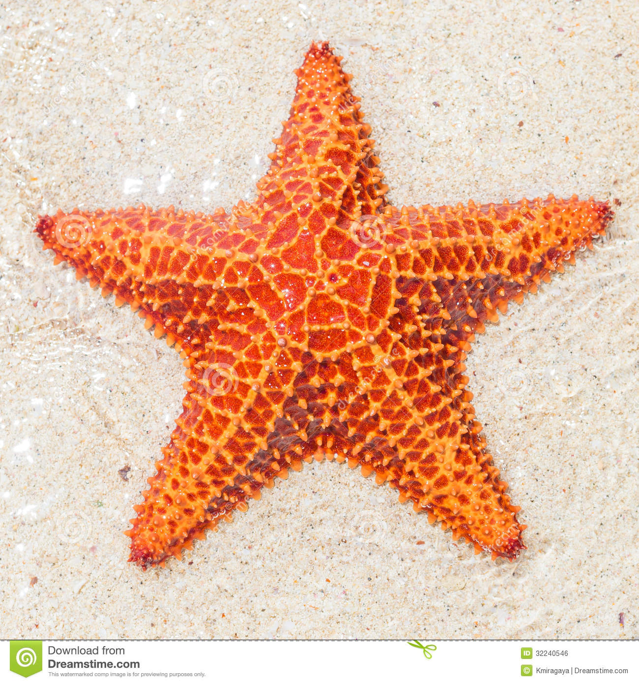 Close-up of a st...Clip Art Starfish Free