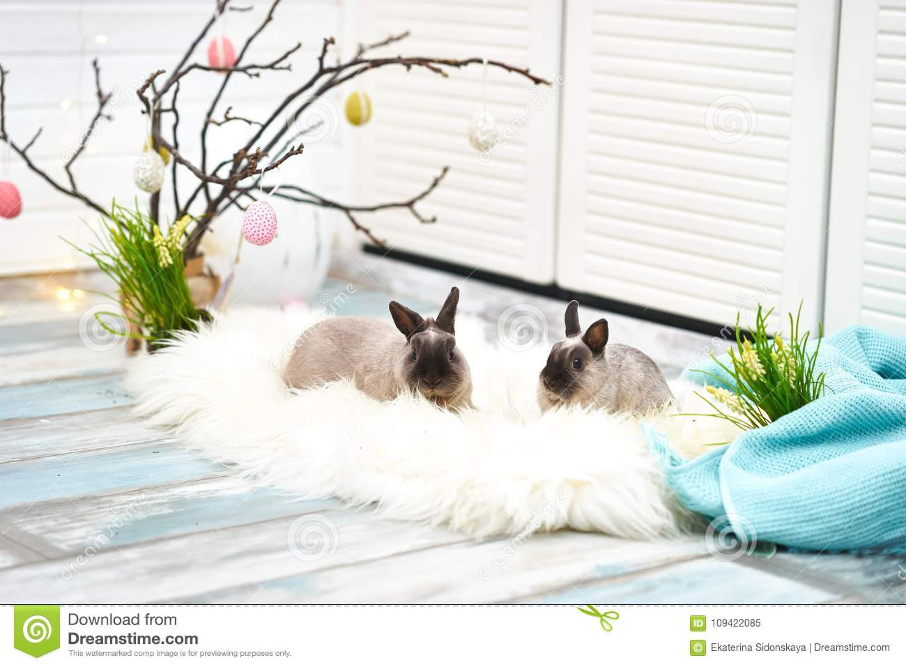 Two Rabbits In Easter Decorations Stock Image Image Of Easter