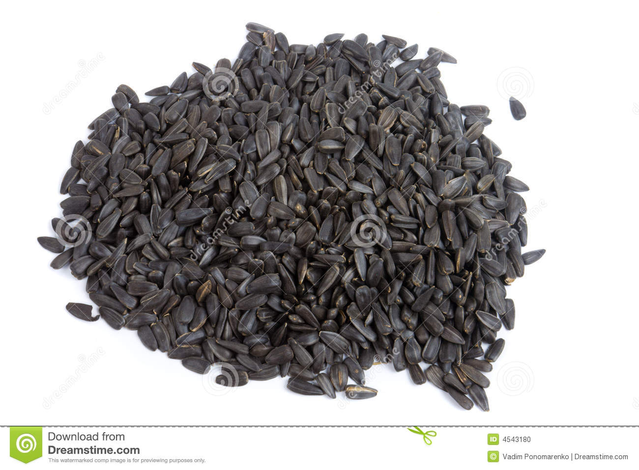 Close-up of sunflower seed