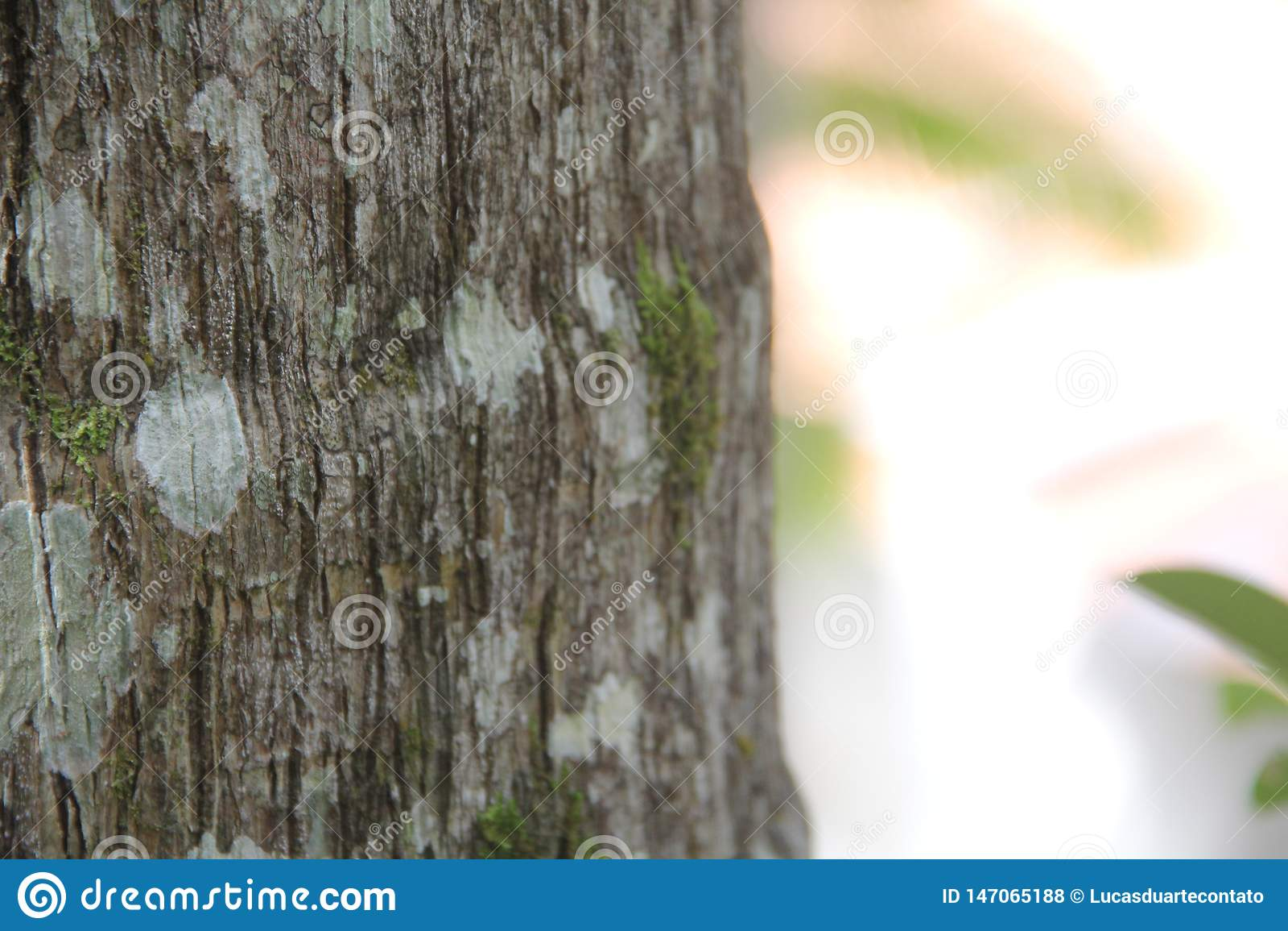 Close up on tree stump with moss
