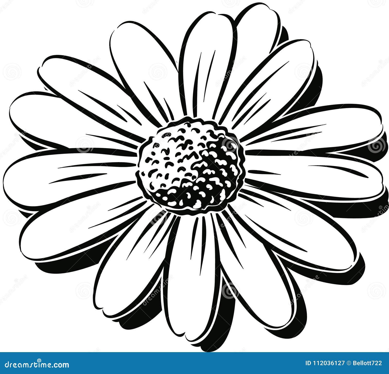 Close-up van de bloem van een madeliefje