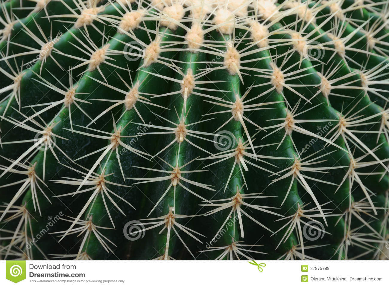 Close-up van de cactus