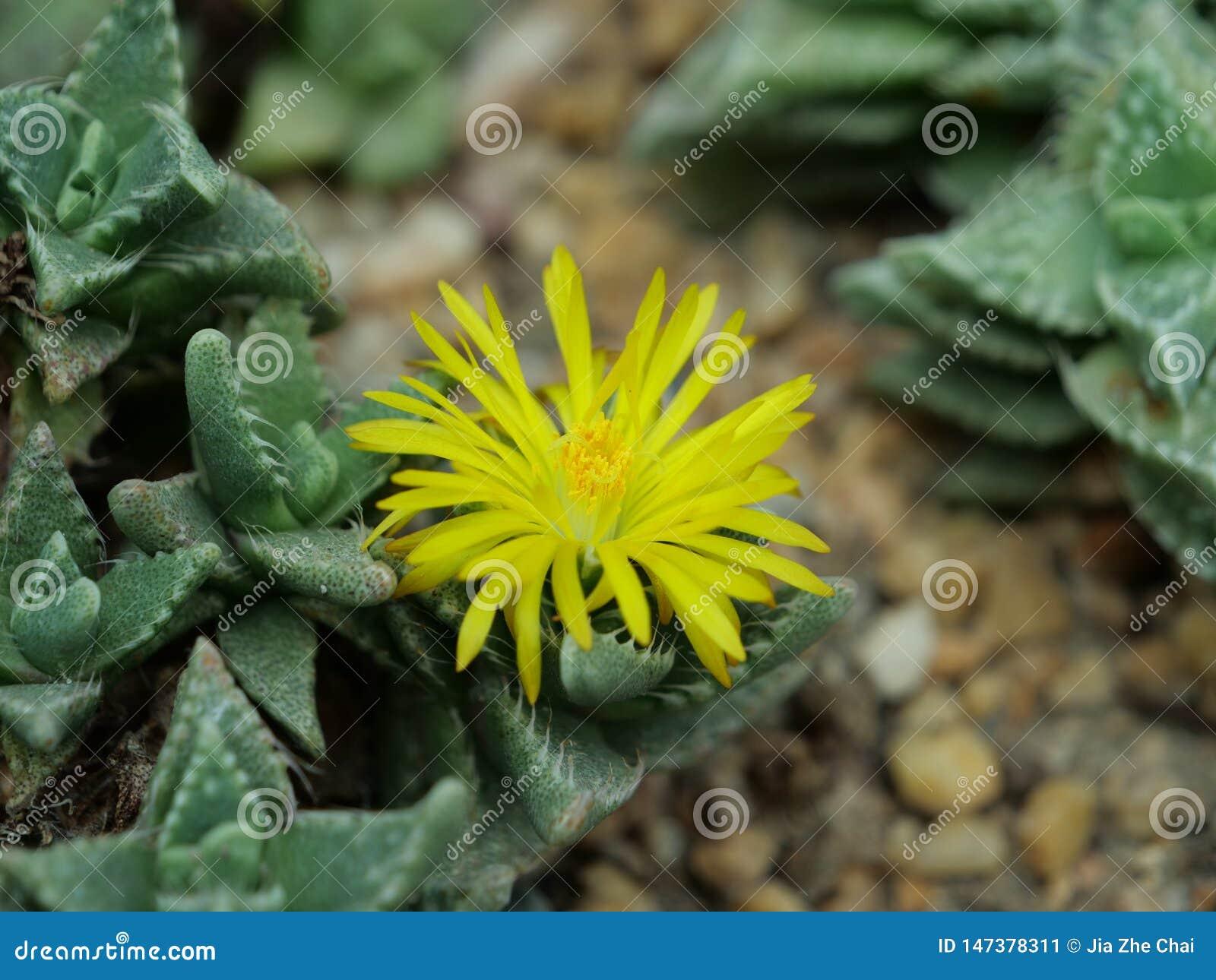 Close-up van een cactus met een gele bloem