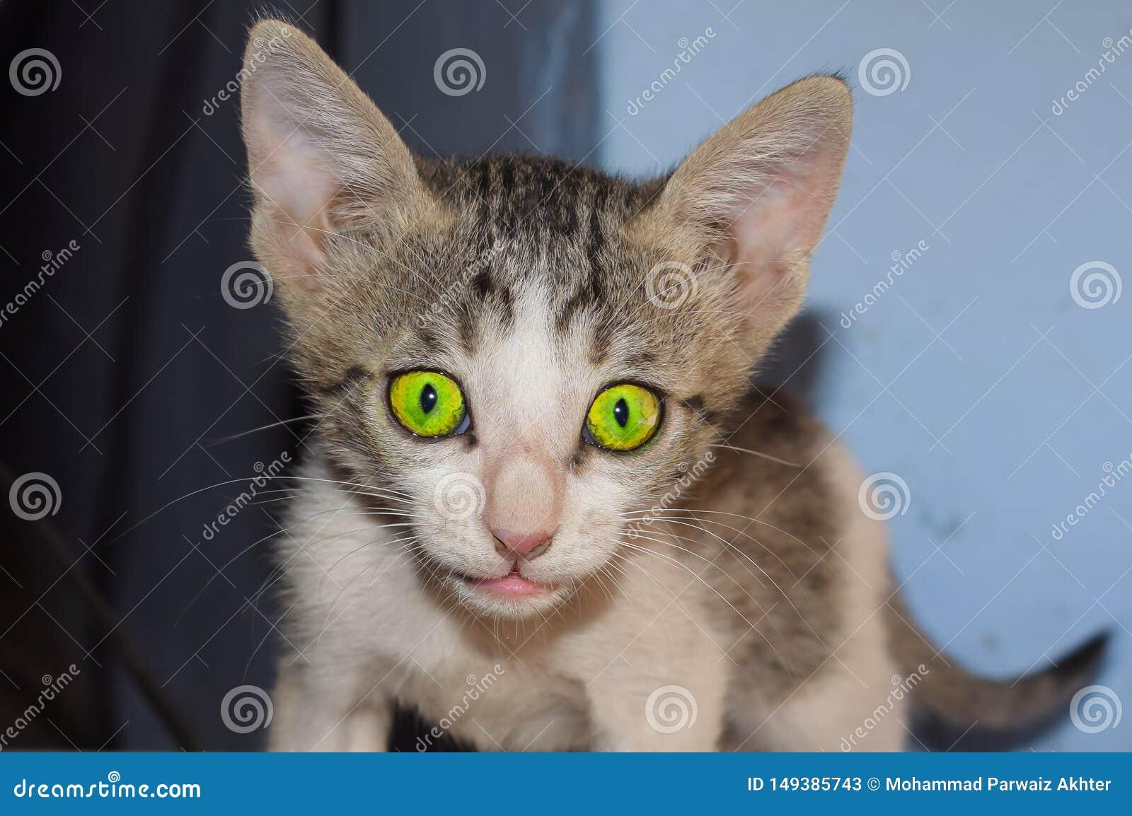 Close-up van een domrstic katje thuis