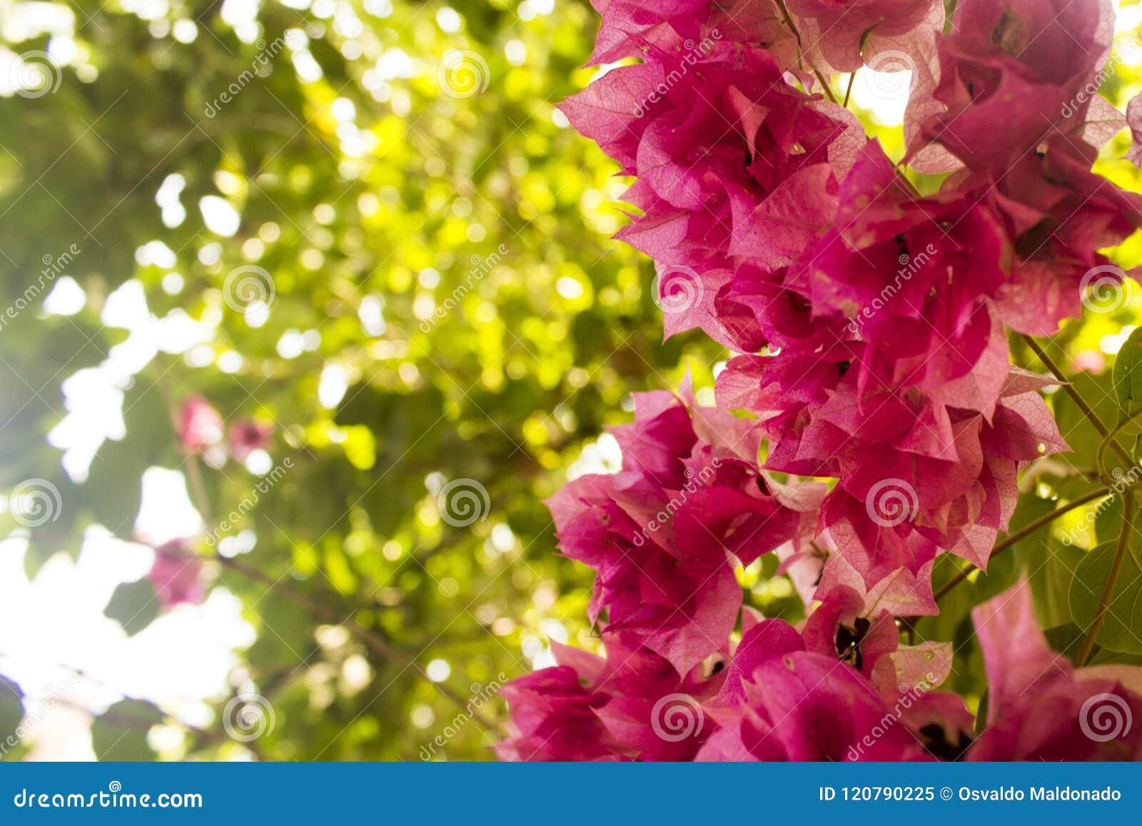 Close-up van een groep violette bloemen met gebladerte als achtergrond