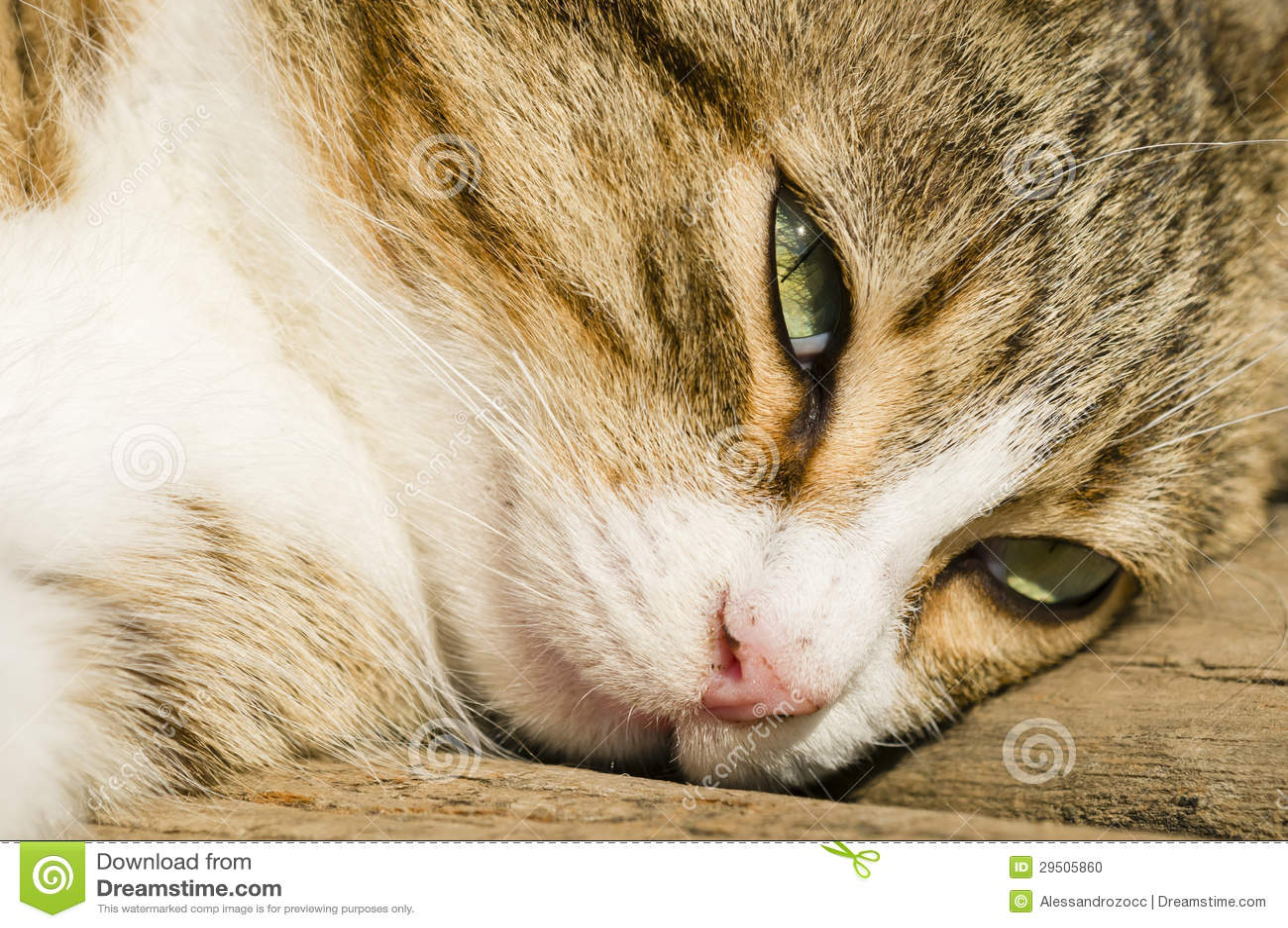Close-up van een kattengezicht