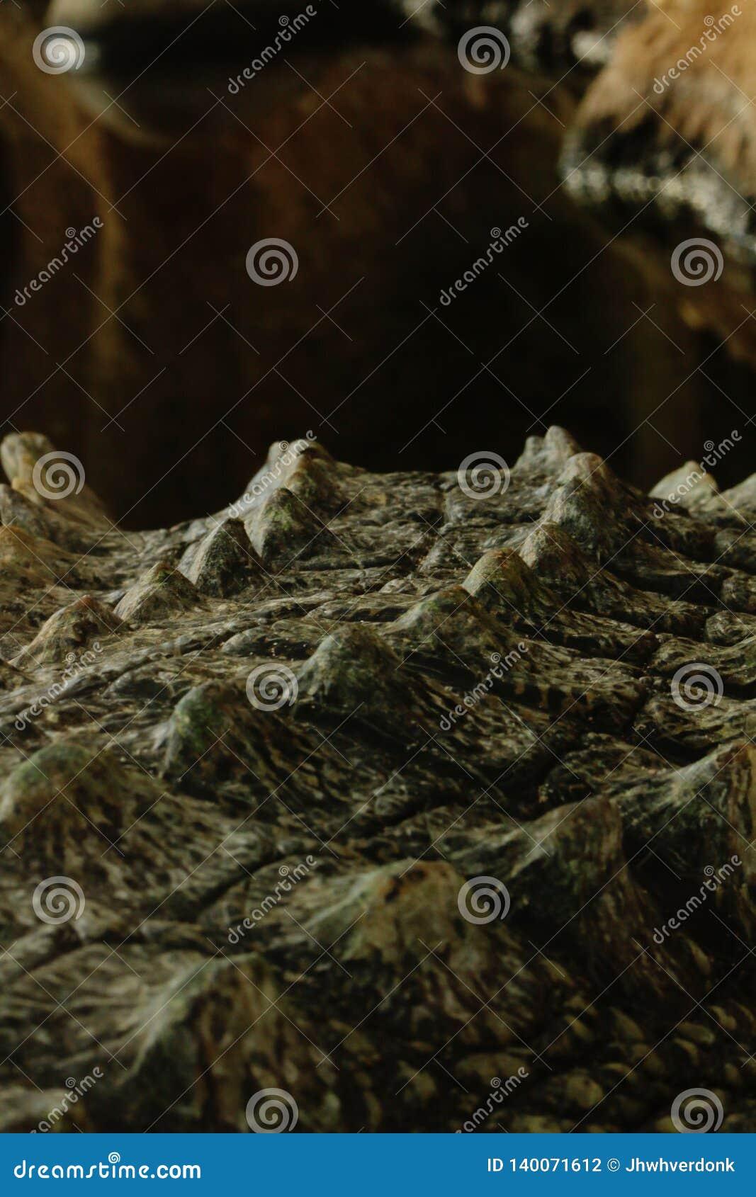 Close-up van een krokodilstaart
