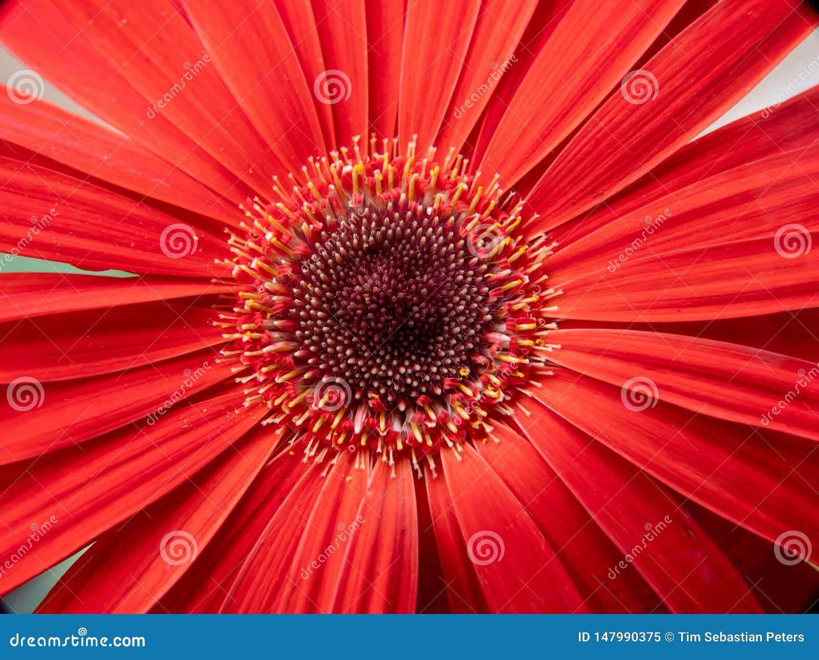 Close-up van een rode bloem
