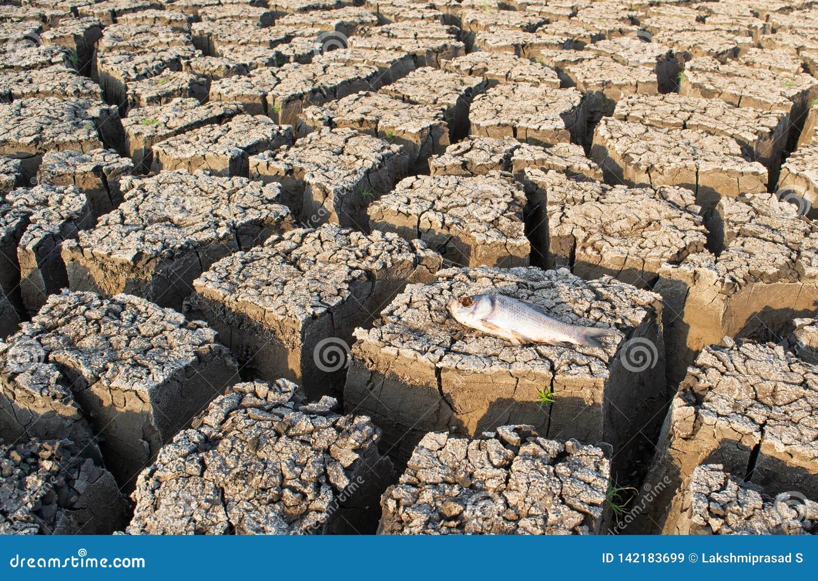 Close-up van gestorven Vissen in een opgedroogde lege reservoir of een dam toe te schrijven aan een de zomerhittegolf, een lage r