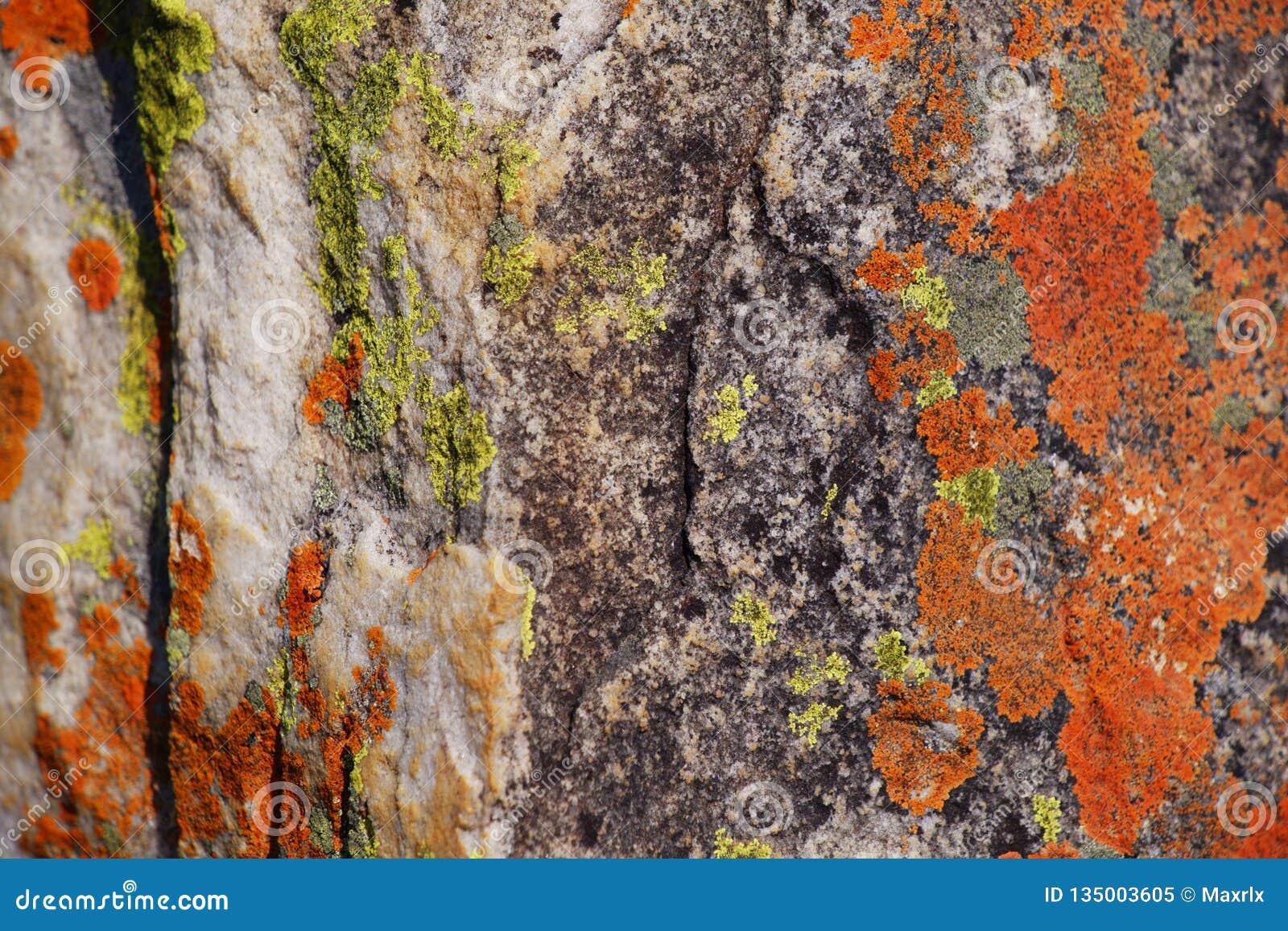 Close-up van groene en oranje korstmossen op rotstextuur in morro do bimbe, Angola