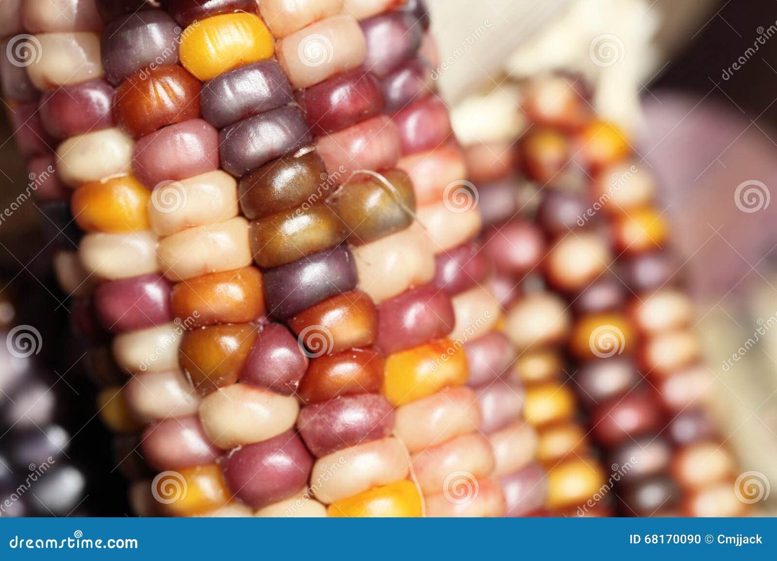 Close-up van kleurrijke droge Maïs als decoratie