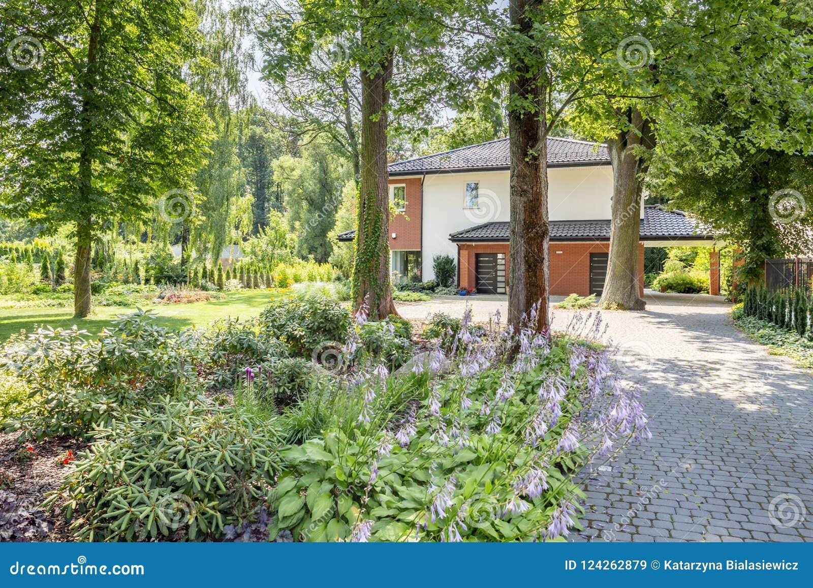 Close-up van struiken naast een weg aan een huis door bomen wordt omringd die