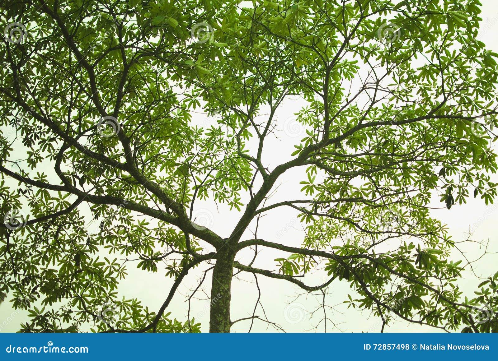 Close-up van zich het weelderige bomen vertakken