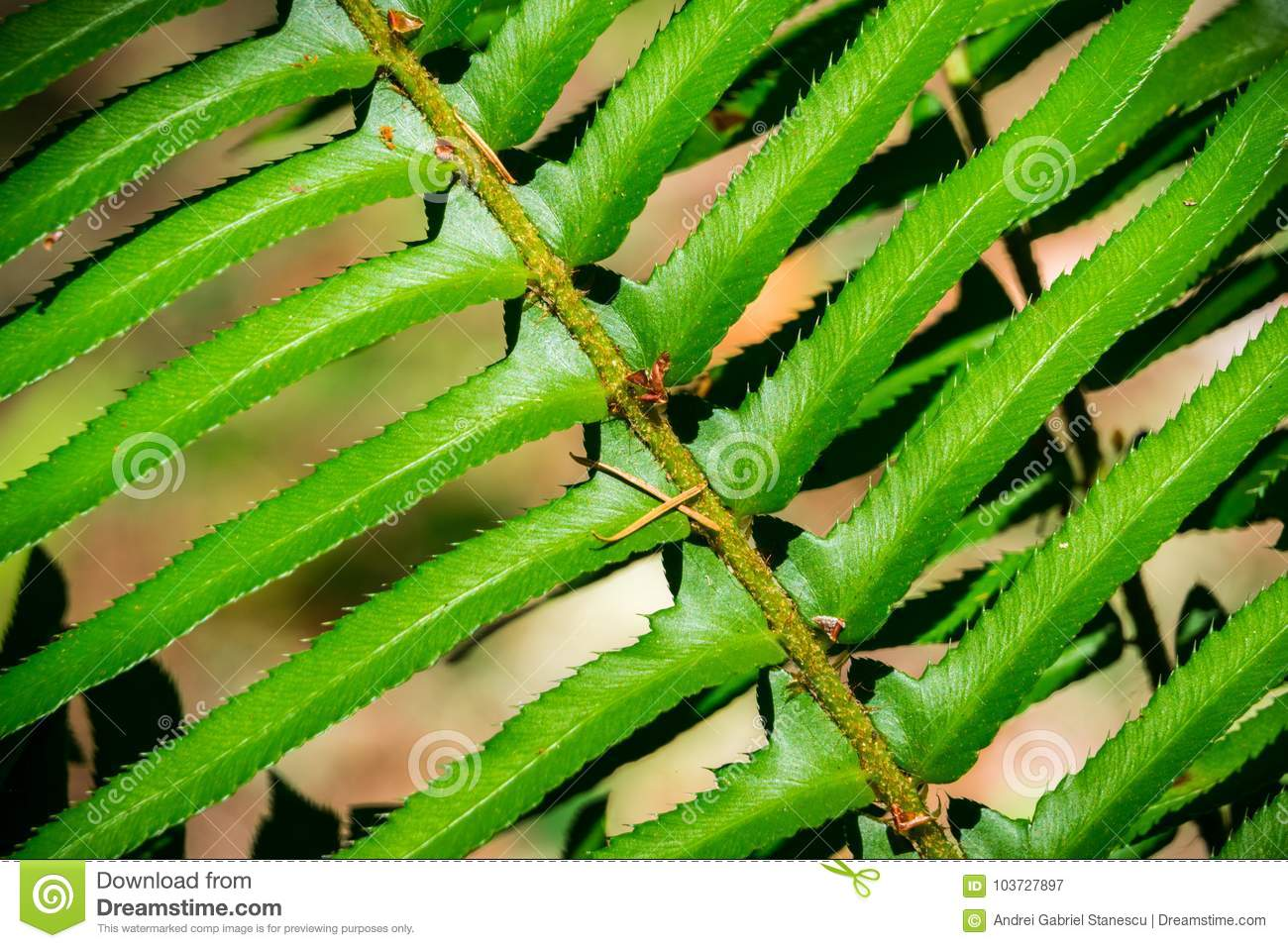 Close up of verdant fern growing in the forest