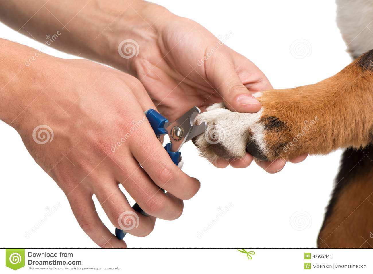 Close-up Of Veterinanian Cutting Dog Nails Stock Image - Image of ...