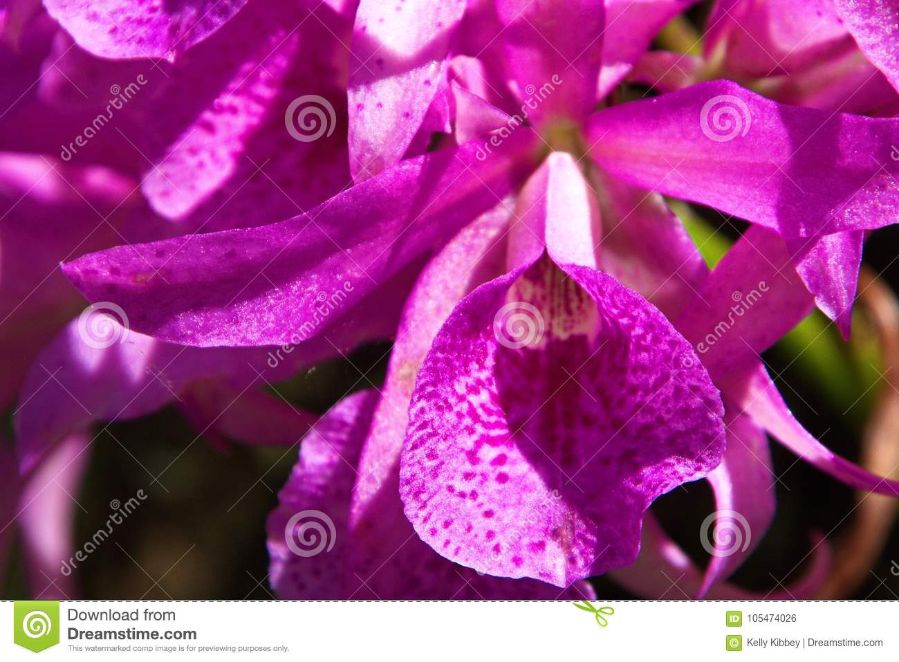 Purple tropical flowers close up stock photo image of attached download comp izmirmasajfo