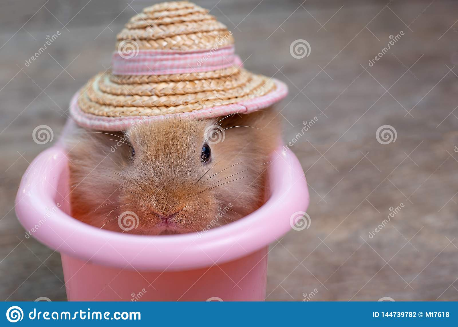 Close up view of cute little light brown bunny rabbit with hat in pink bathtub on wood table