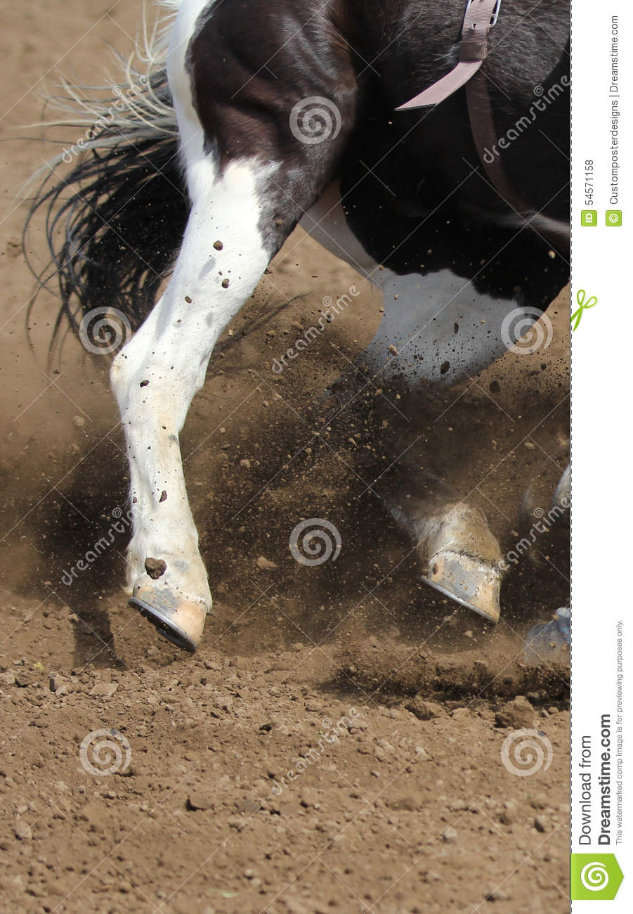 Download A Close Up View Of A Fast Running Horse And Flying Dirt. Stock Photo - Image of high, country: 54571158
