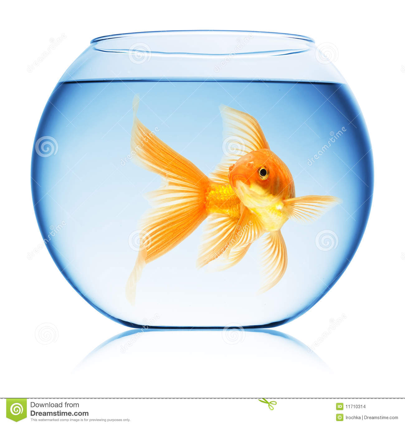 Close up view of fish bowl isolated stock photo image for Fish in a bowl