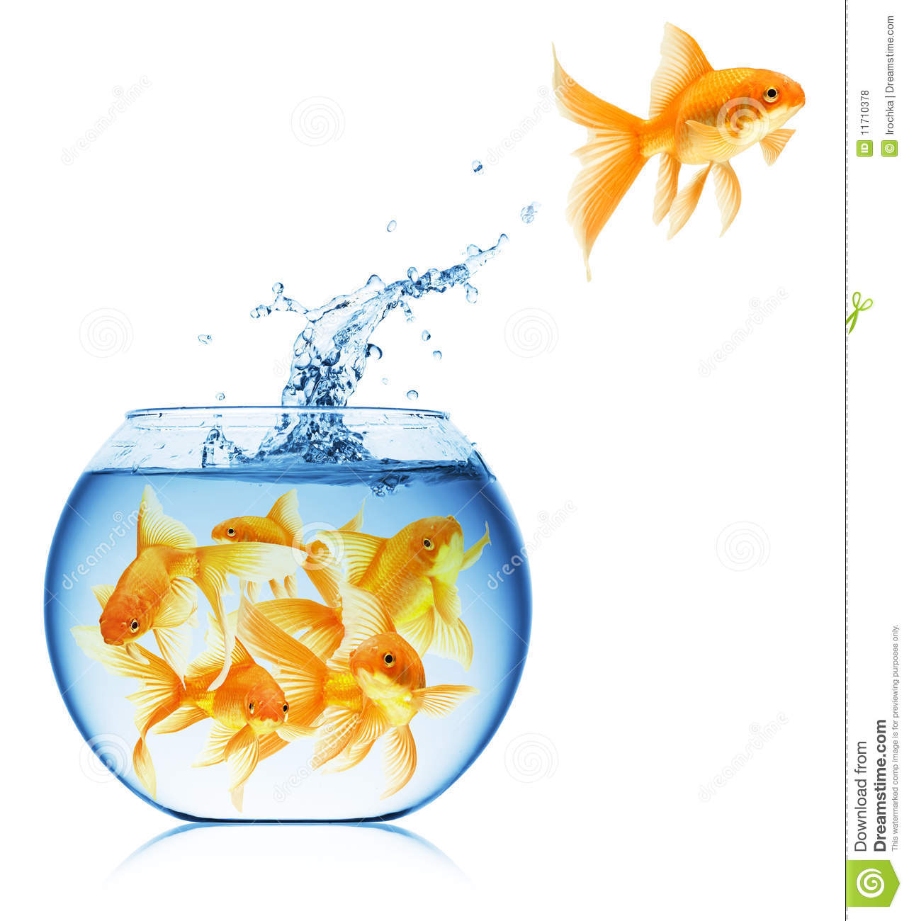 Close up view of fish bowl isolated royalty free stock for Best fish for fish bowl