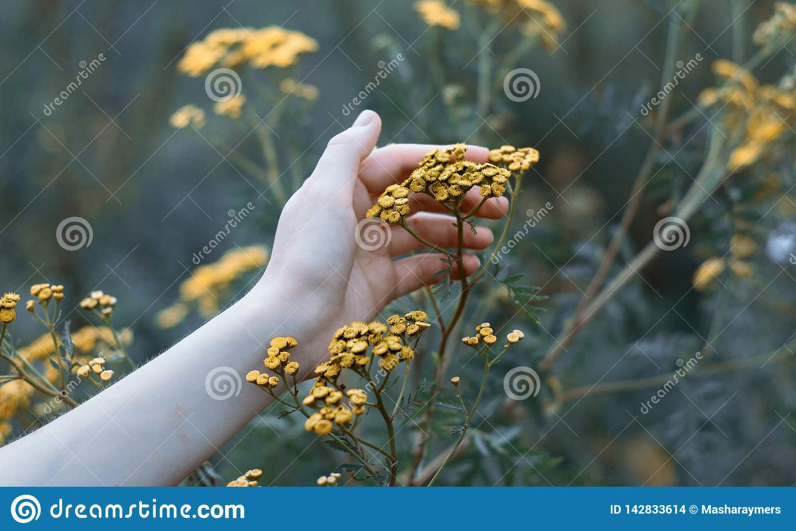 Hand that holds a plant.