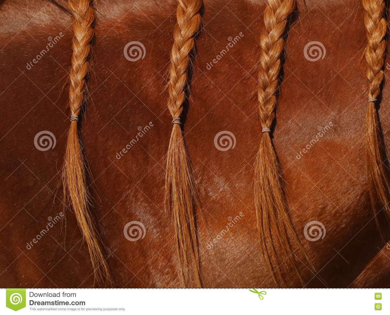 Download A Close Up View Of The Mane Of A Sorrel Horse In Braids. Stock Image - Image of mammal, detail: 80170345