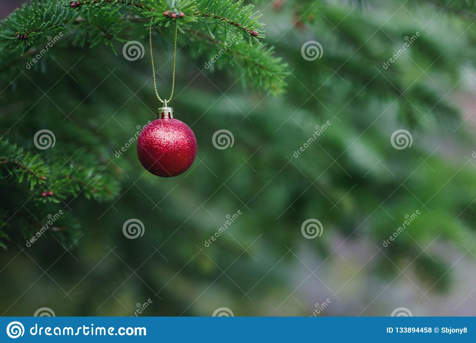 Close-up view of red ball as decoration hanging on the branches of a Christmas tree and sparkling in the sunshine. Christmas in