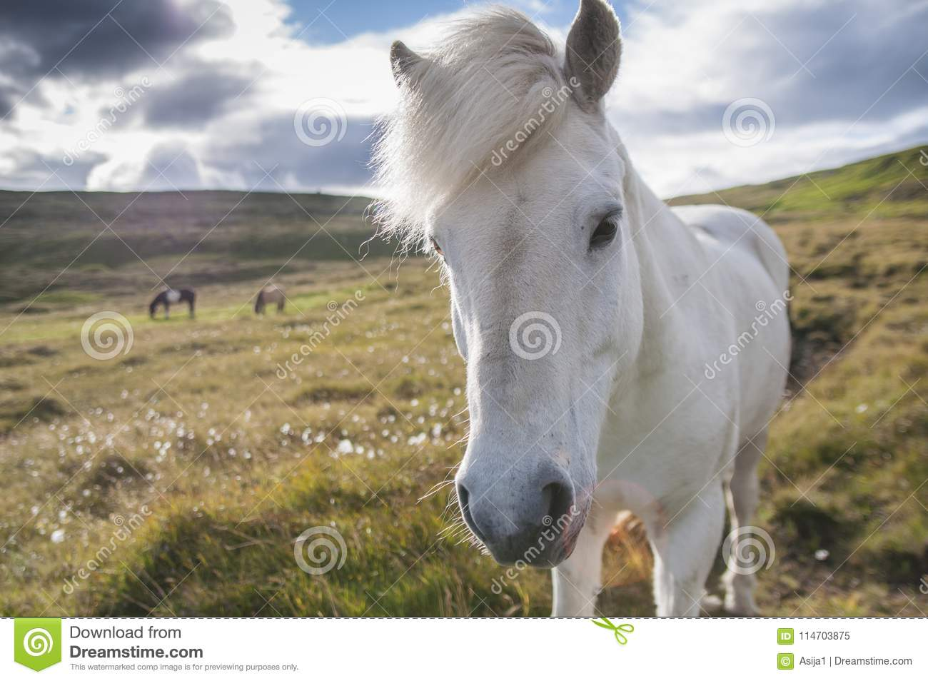 Royalty Free Horse On Hind Legs Pictures, Images and Stock ... |White Horse Standing Up