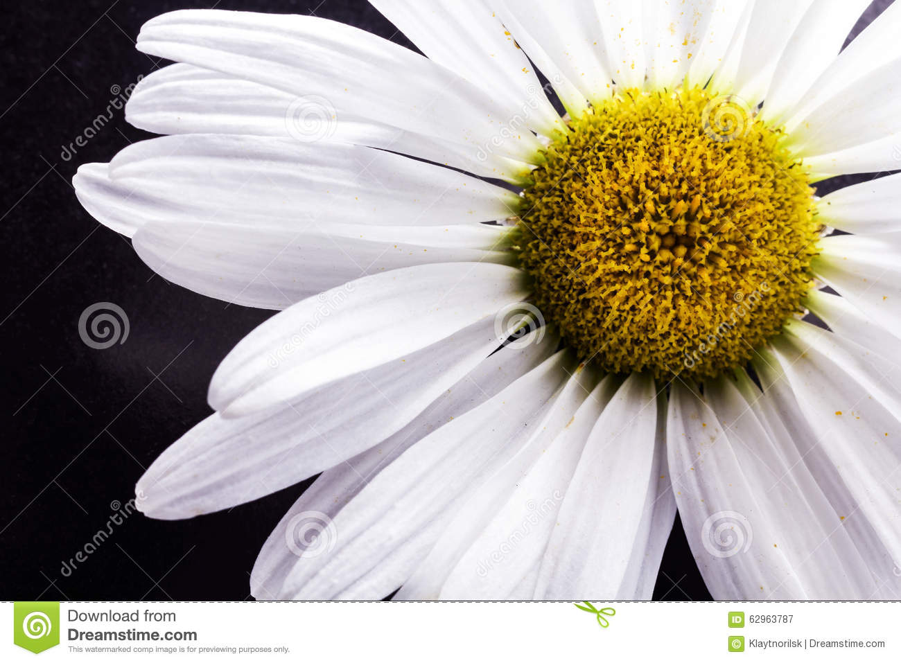 Close Up Of A White Daisy Flower Stock Image - Image of ...