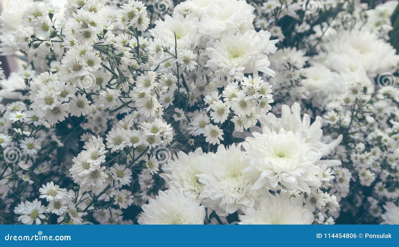White Gypsophila Flower Stock Photo Image Of Color 114454806