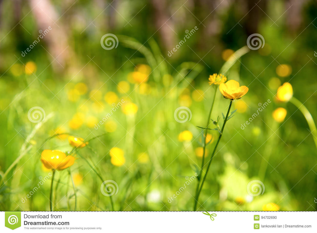 Close Up Wild Yellow Flower In A Green Forest Stock Photo Image Of