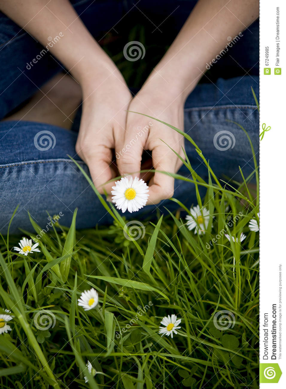 Close-up of a woman holding a daisy