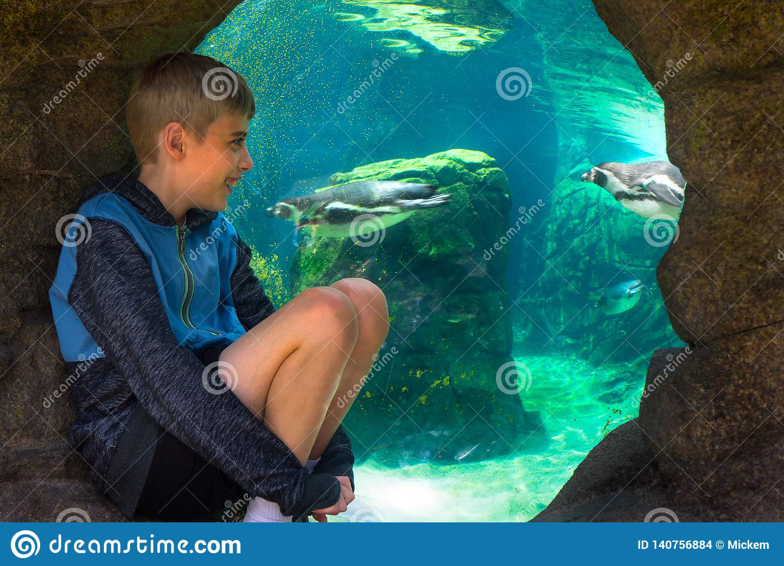 Close up Young Boy Watching Sea Life Penguins