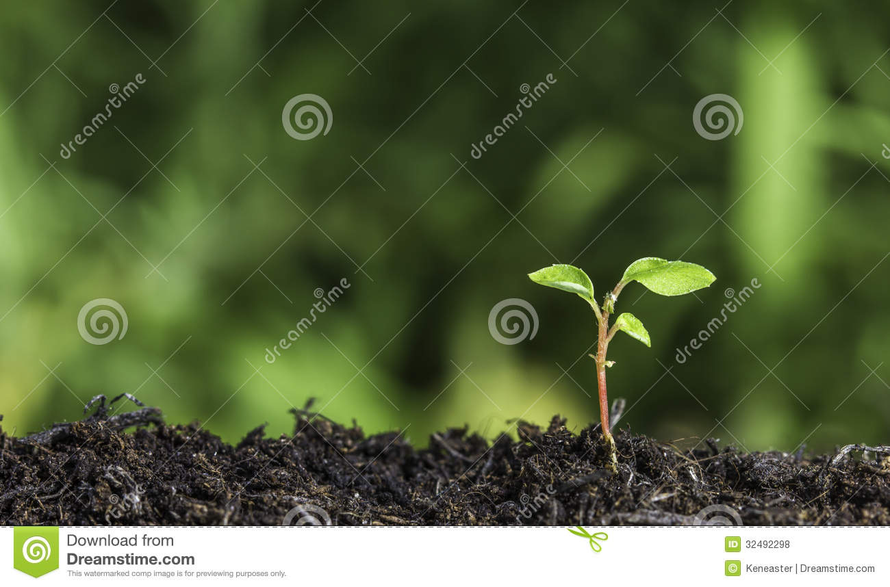 Close up of young plant sprouting from the ground with green bokeh background
