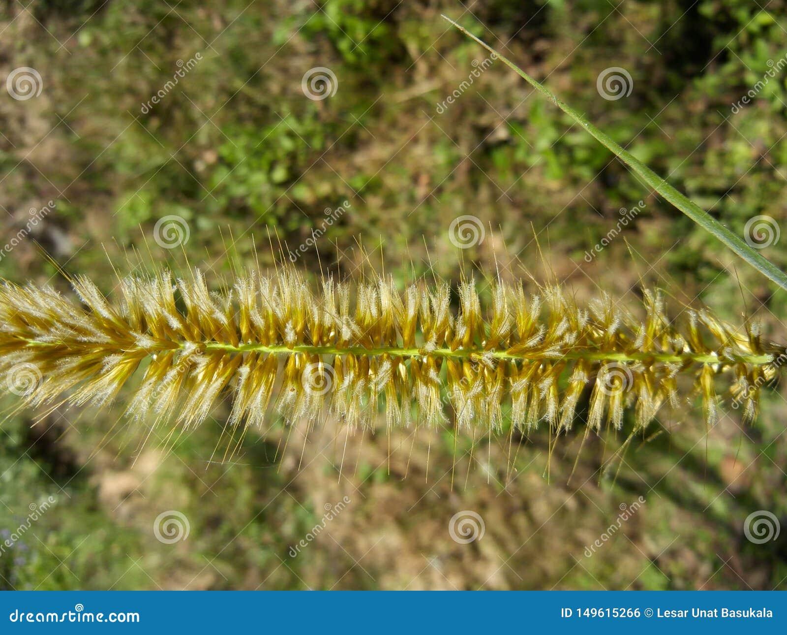 Close-upaar van een gras met bloemen