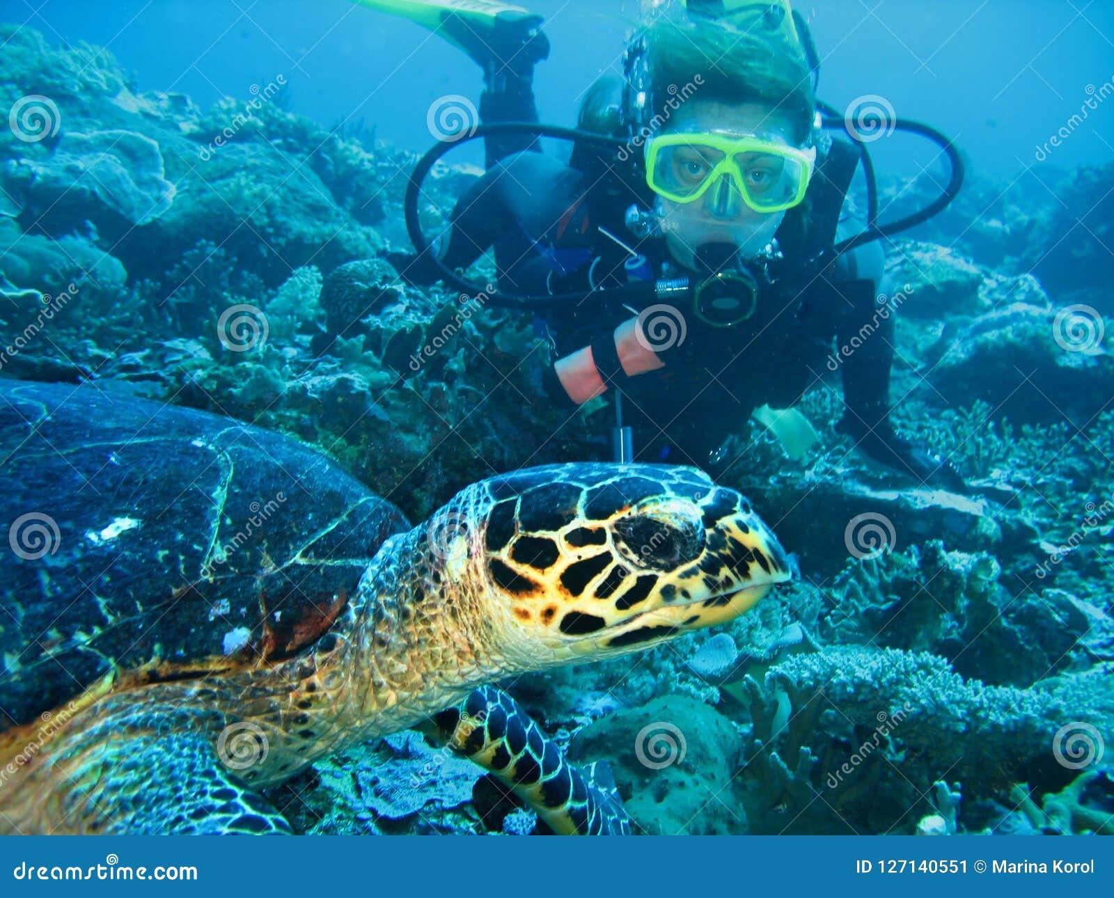 Close-upfoto van een schildpad en een jonge vrouwenscuba-duiker De duiker kijkt vooruit De schildpad is op voorgrond