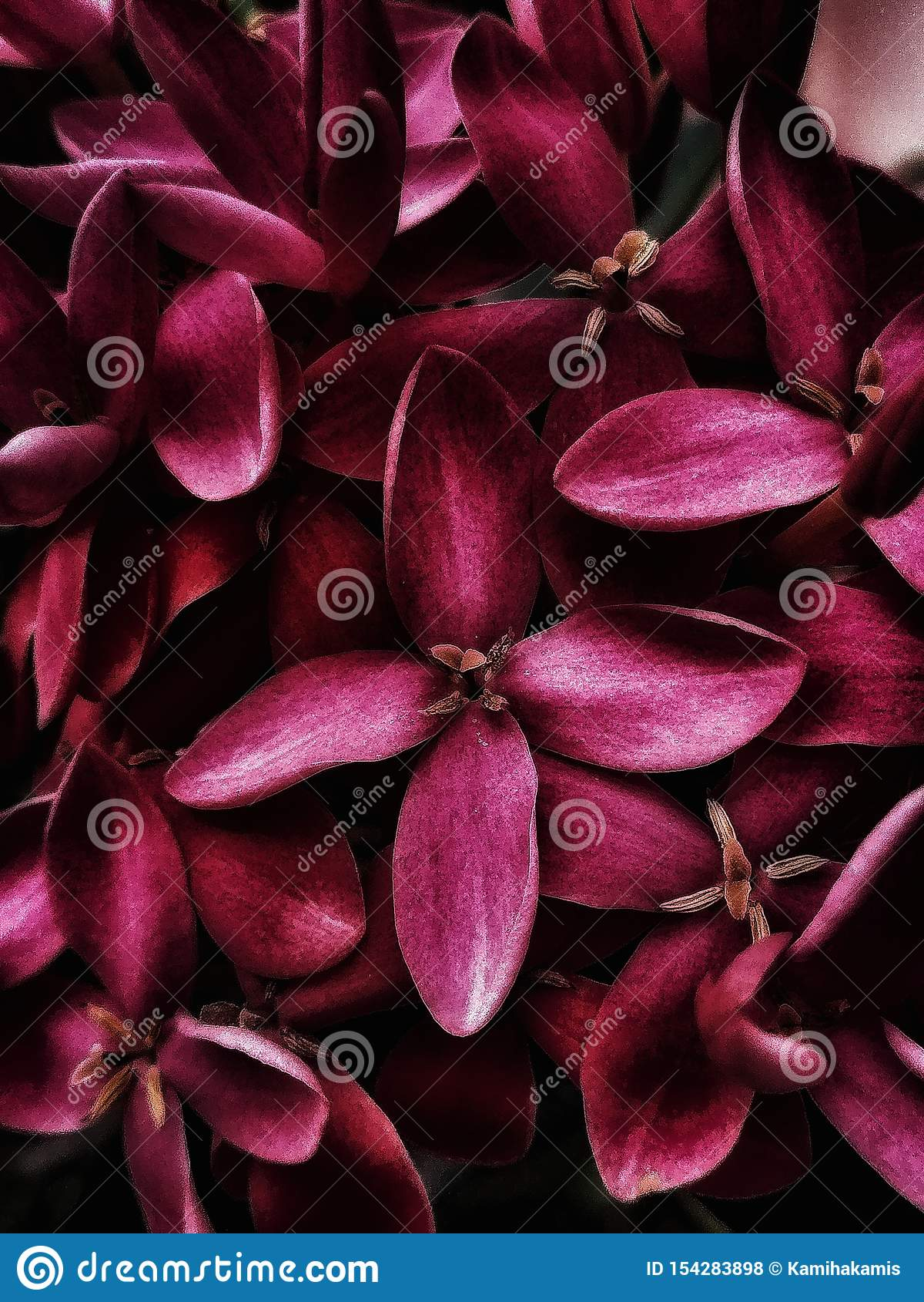 Close-upmening van mooie rode bloemen bij de tuin