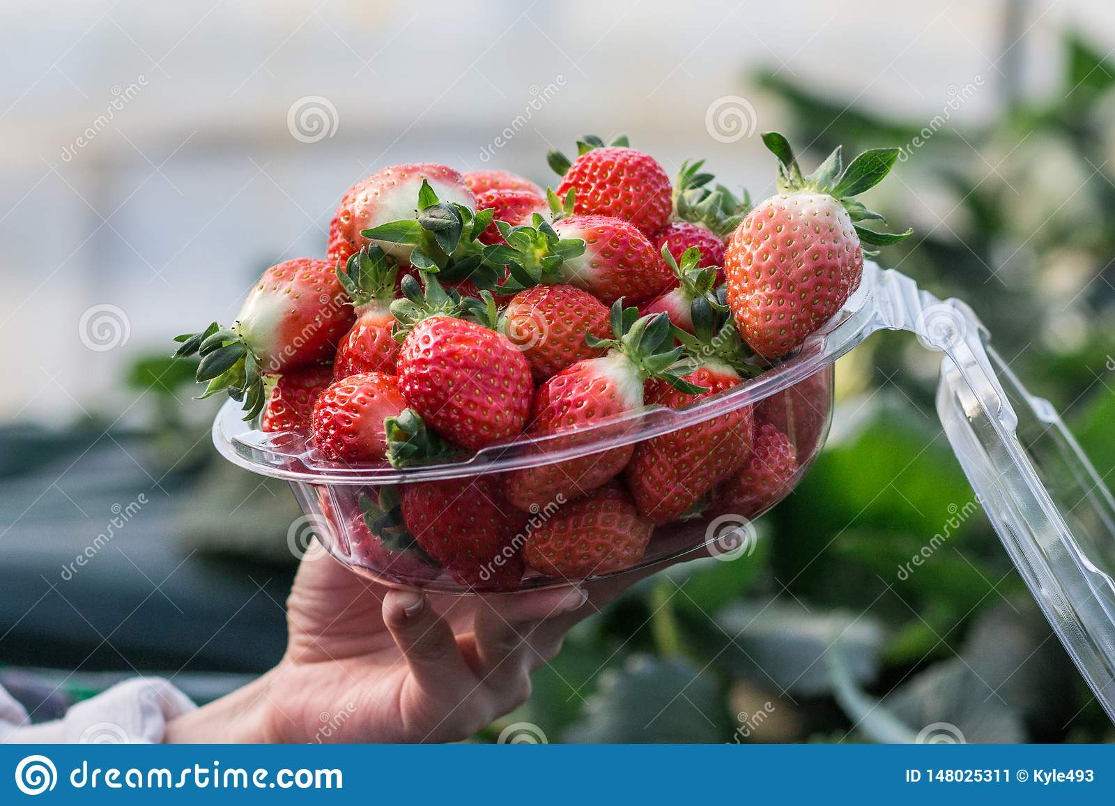 Close-ups van een vrouw die een kom van vers geplukte aardbeien houden