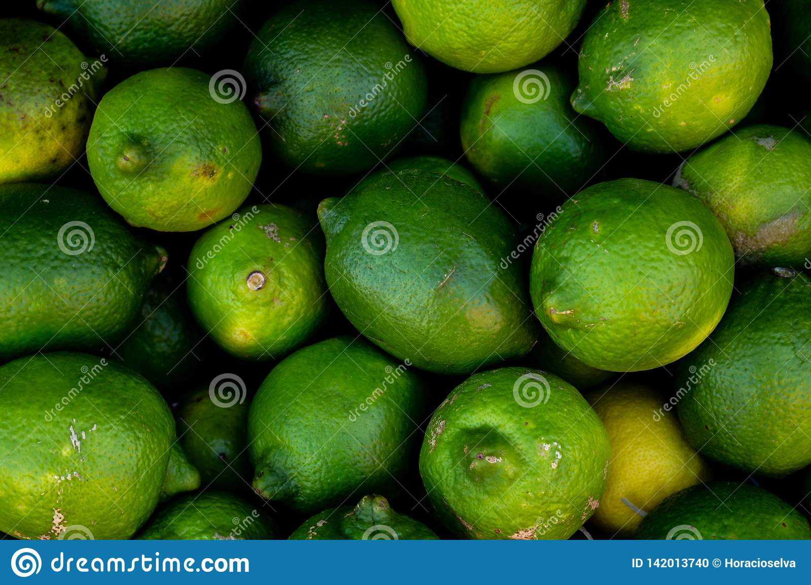 Close view of several green lemons. Of vibrant green and yellow colors