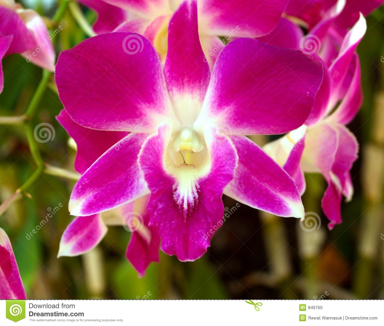 Closed up Orchid Flowers