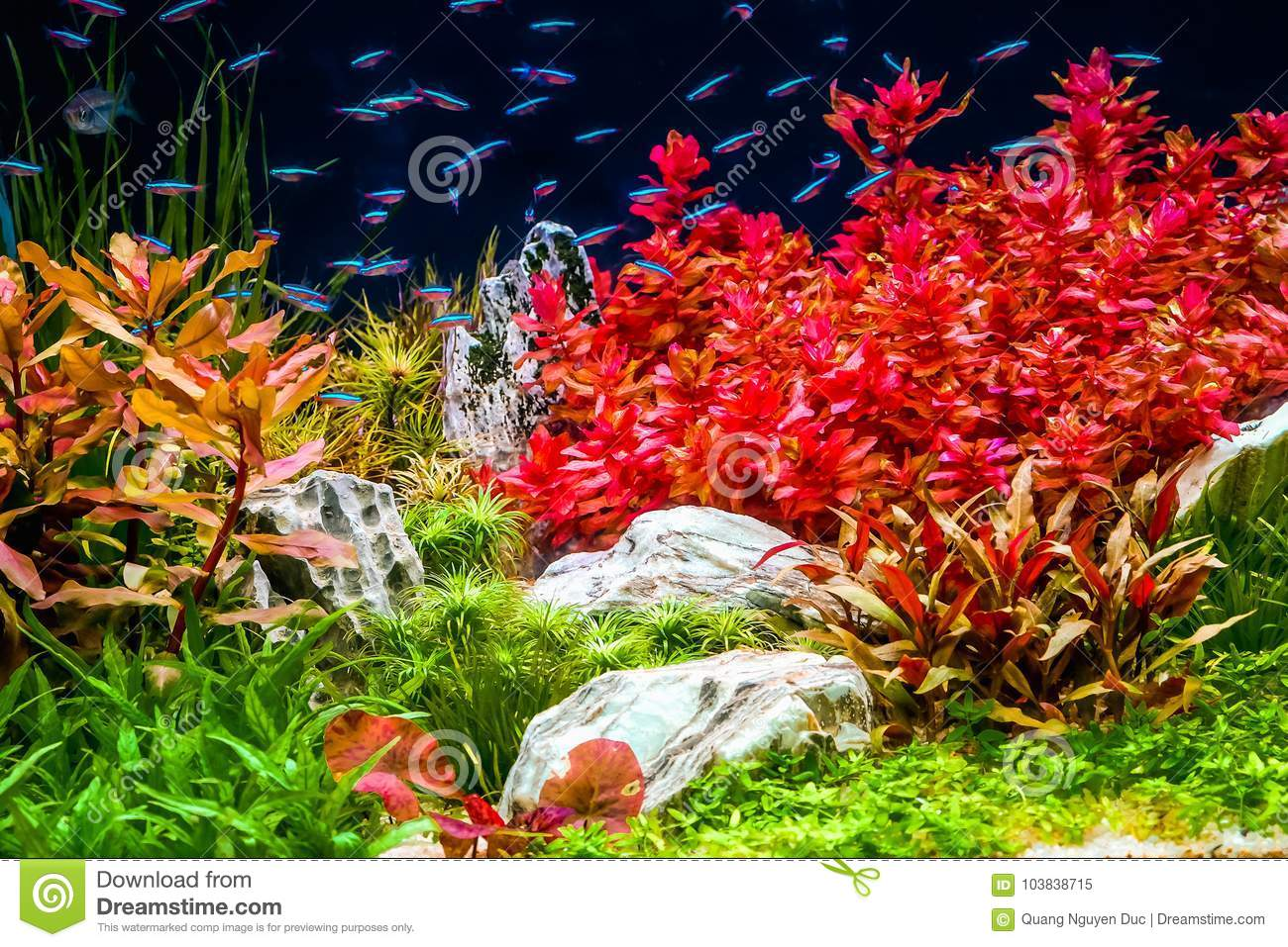 Fish Swimming Stock Images - Download 58,009 Photos