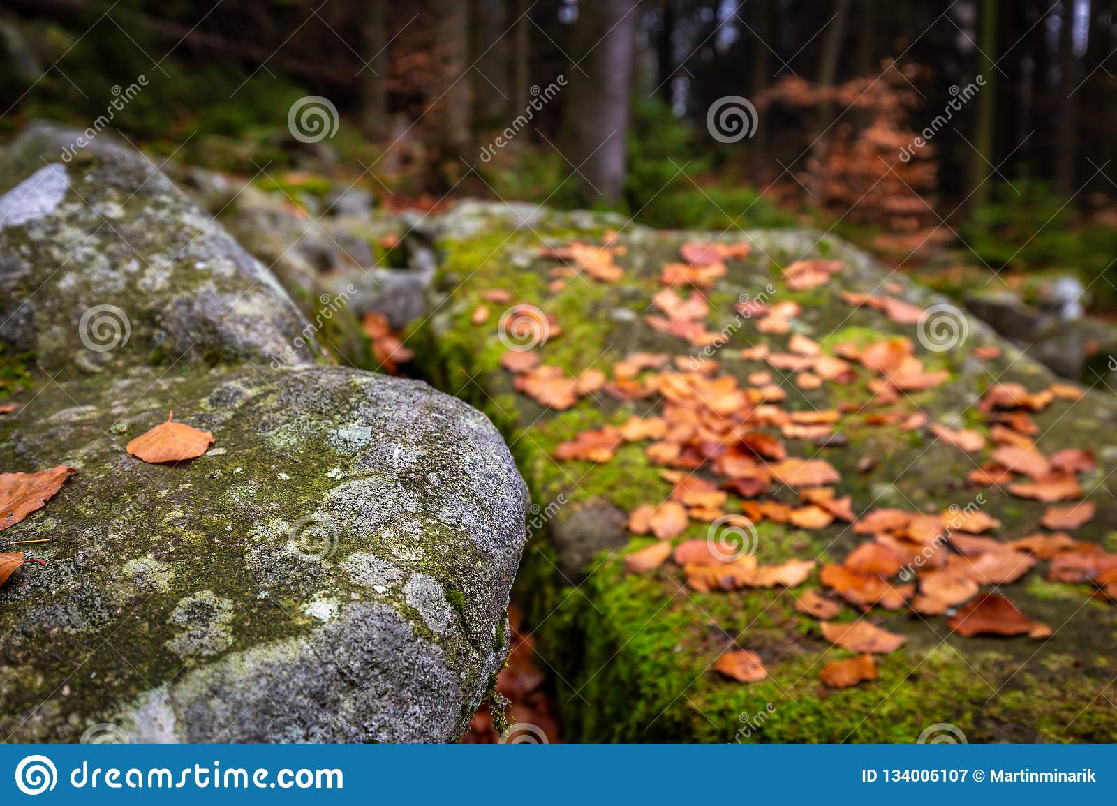 Closeup on autumn forest with rocks full of moss and colorful fallen leaves on the ground