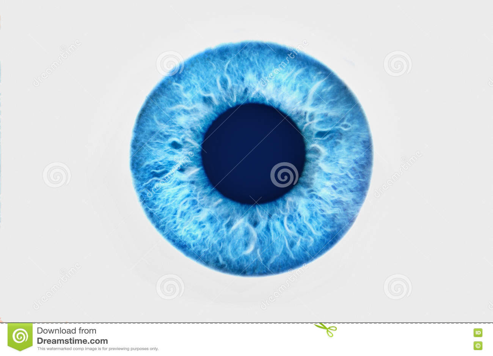 Closeup av det blåa ögat på vit bakgrund