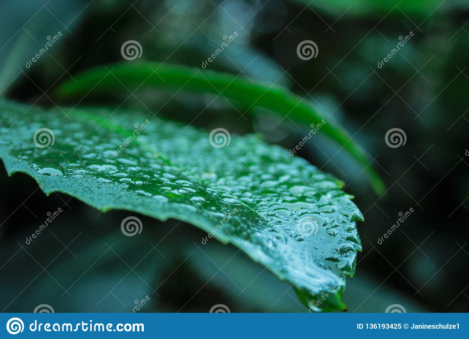 Closeup av det gröna bladet som täckas med waterdrops i rainforest på den södra ön av Nya Zeeland