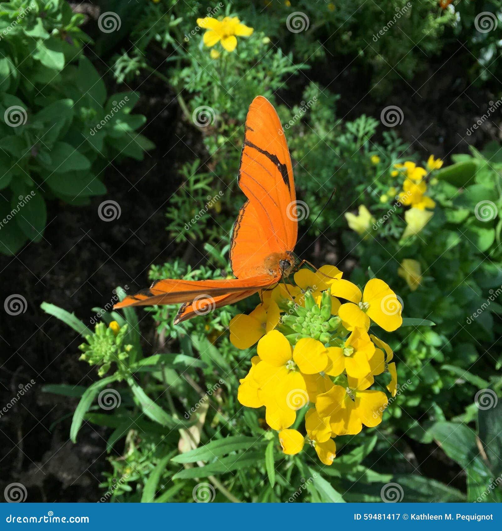 Closeup av en orange fjäril